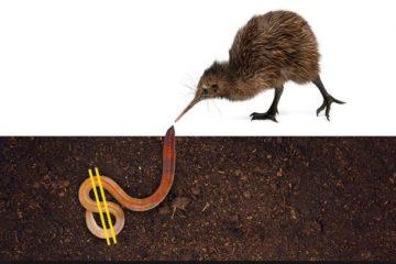 Kiwis have more money than sense