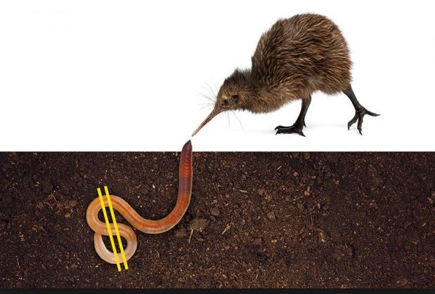 Kiwis have more money than sense